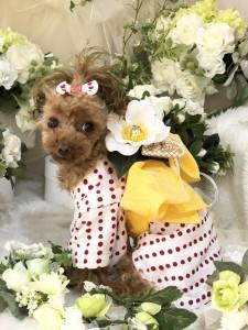 犬の生活様仕入れ品完成画像提供品FB06EC0B-C9BB-42CE-8958-34070CC3EF15