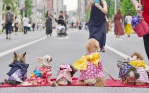 犬の生活様仕入れ品完成画像提供1ED37367-4DF9-4B2C-A642-C98B3F813FCF